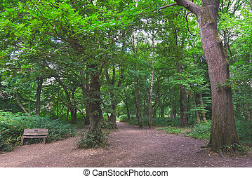 Path through Banstead woods in Surrey, England