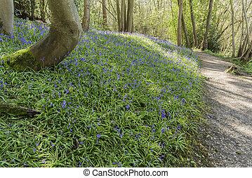 Path Through Bluebell Wood