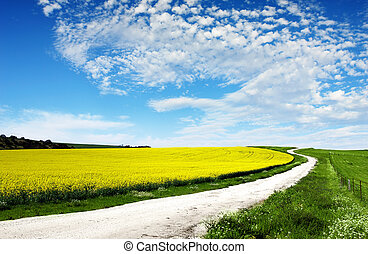 Path through Canola Field