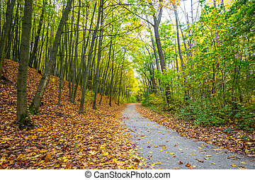 Path through forest lined with fallen leaves in autumn.