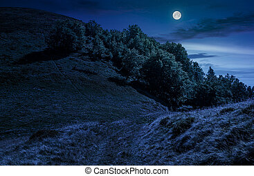 path through forest on hillside meadow at night - path...