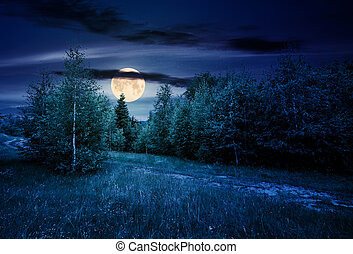 path through forested grassy meadow at night in full moon...