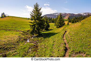 path through grassy slope in to the forest. beautiful...