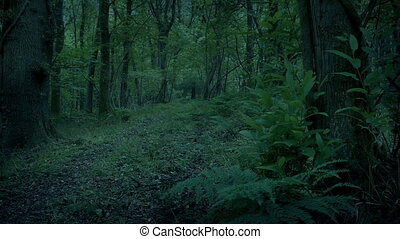 Path Through Green Peaceful Woodland Moving Shot - Moving ...