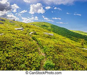 path through hillside with white boulders - path through...