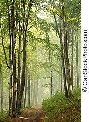 Path through misty autumn forest