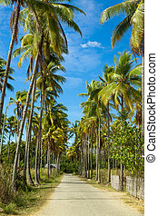 Path through of coconut palms leading to beach. Island Flores. Indonesia.