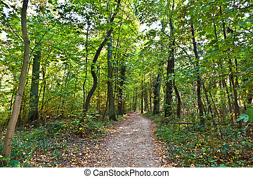 path through old oak forest