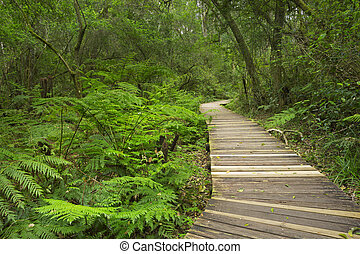 Path through rainforest in the Garden Route NP, South Africa...
