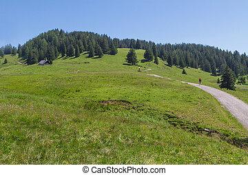 Path through rural mountain landscape in summer, near Walderalm, Austria, Tirol