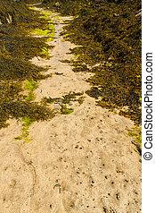 Path through seaweed on beach.