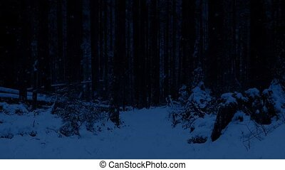 Path Through Snowy Forest At Night