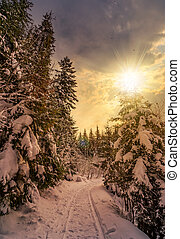 path through spruce forest in winter at sunset - path...
