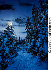 path through spruce forest in winter at night - path through...