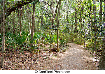 Path Through Sunny Tropical Forest