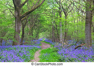 Spring landscape of a path through the woods surrounded by bluebells.