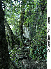steps and a path through the oxley world heritage rainforest