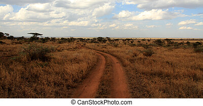 Path Through the Serengeti