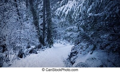 Path Through The Woods In Thick Snow - Pretty woodland path...