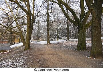 Path through trees in snow