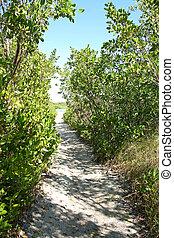 Path Through Woods Leading to Secret Beach