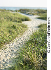 Sandy pathway to beach on Bald Head Island, North Carolina.