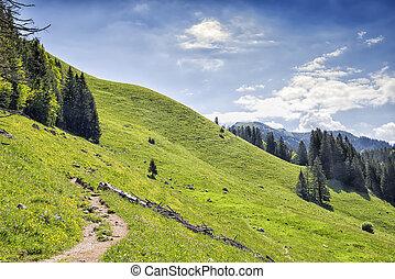 Path to Jaegerkamp Bavaria Alps