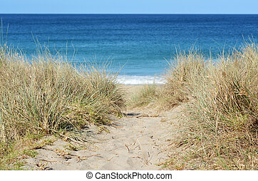 Path to the beach - Path leading through sand dunes to the ...