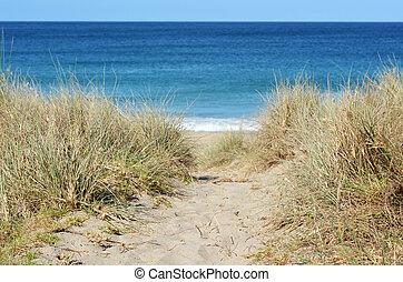 Path leading through sand dunes to the beach at Matai bay, New Zealand.
