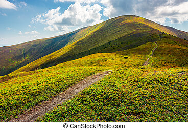 path to the top of the mountain. beautiful summer landscape....