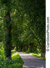 path under the trees of longest linden alley in Europe....