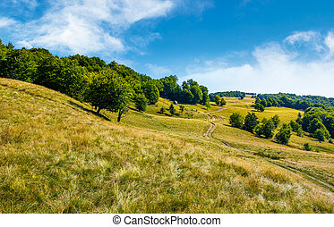 path up the forested hill. beautiful summer landscape in...