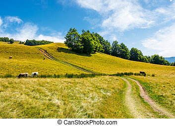 path uphill through grassy meadow. few cows grazing in the...