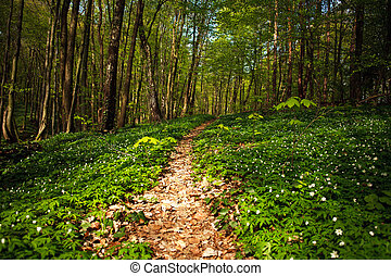 Path way in the blossoming spring forest, nature background