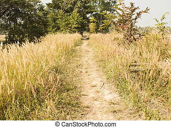 path way in the grass.