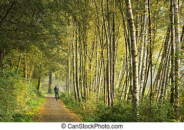 Path with birch trees