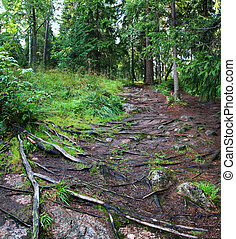 path with roots of trees in forest