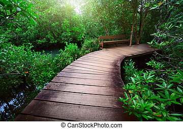 Path - Wood path over river and through tropical forest