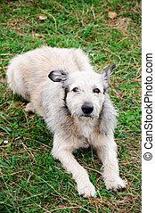dog sitting on a grass