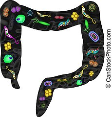 pathogenic, microflora, 在, the, intestine., dysbacteriosis.,...