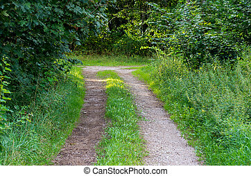Pathway and the crossroads in the forest