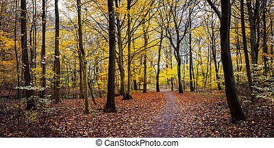 Pathway between yellow trees in the autumn golden forest. Panorama