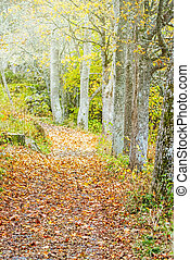 Pathway in a autumn forest