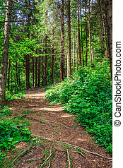 pathway in a forest go up - pathway in a forest among the...