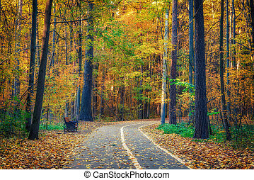 Pathway in autumn forest