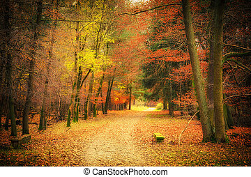 Pathway in autumn park