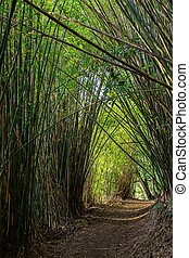 Pathway in bamboo forest
