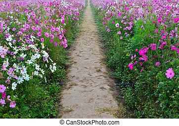 Pathway in beautiful spring flowers