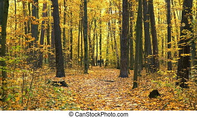 Pathway in bright autumn park at fall - Pathway in the ...