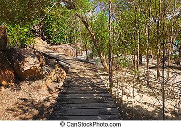 Pathway in jungles